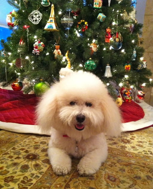 Merry Christmas from Coco!